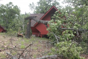 Tree Down by Cabin 14